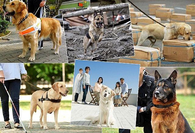 盲導犬、聴導犬、災害救助犬、麻薬捜査犬、そして警察犬 人間社会で、活躍する様々な犬たち