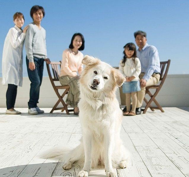 家族に見守られて、中心で写真に写る犬