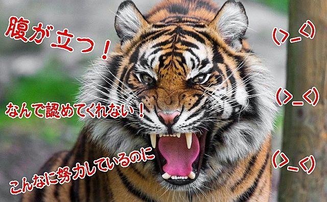 自分の思うがままにならず腹を立てている虎