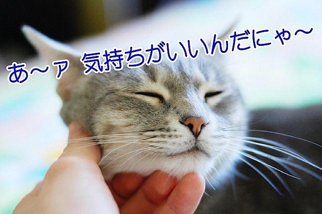 顎を撫でてもらって気持ちがいい猫