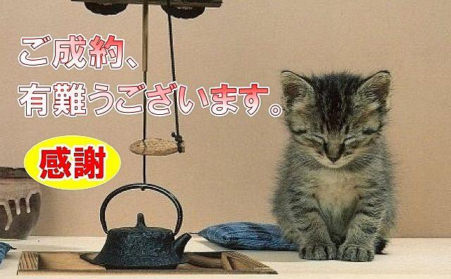 ご成約に対し感謝の気持ちでお辞儀する猫