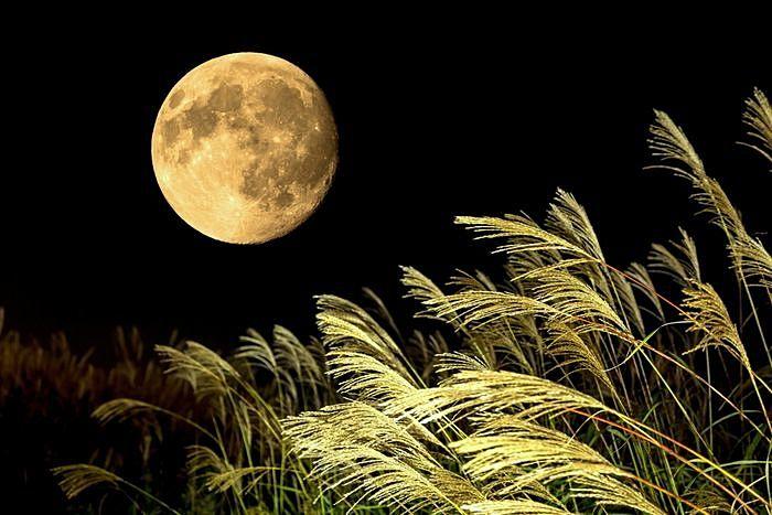 ススキの向こうに見える中秋の名月の写真