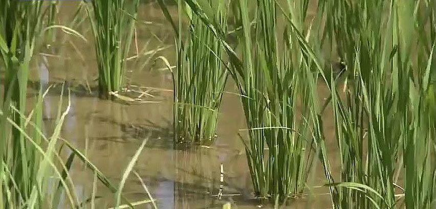 農業用水、生活用水として市民の暮らしを支える加古川大堰の水