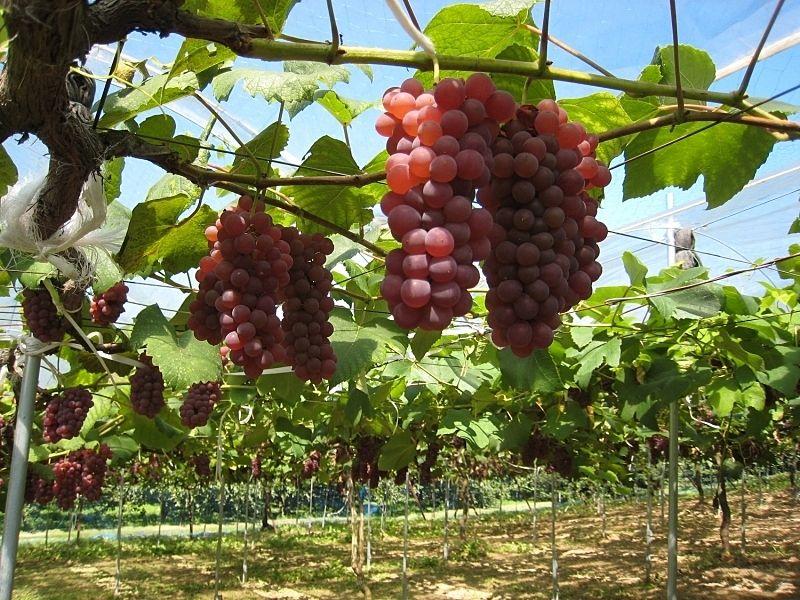 四季折々に果物が実り、旬の味覚の味わえる、みとろ観光農園です。