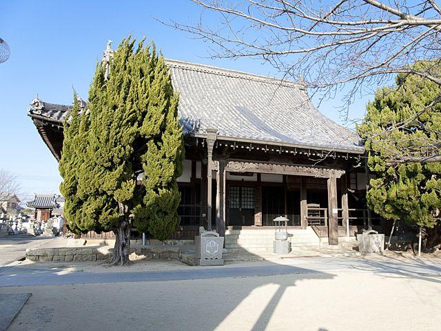 参拝者を迎えるかのように枝を風になびかせる常楽寺正面の大木