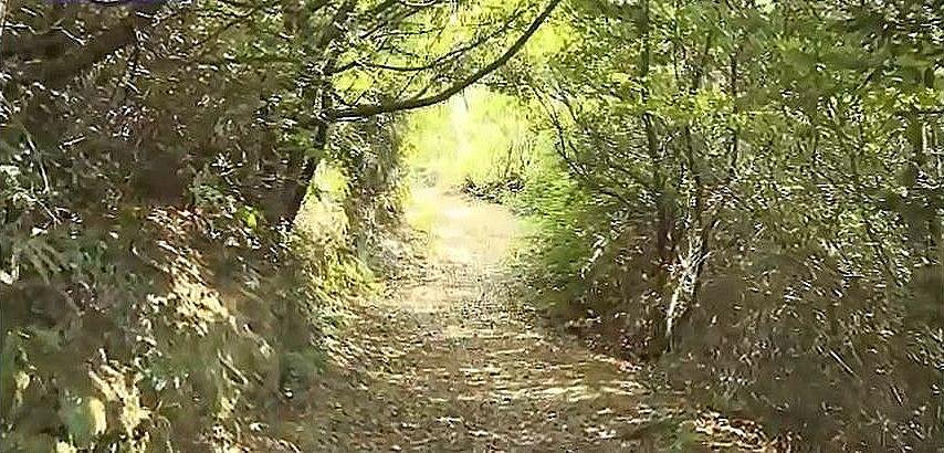 木の枝葉が茂りハイキング道はトンネルのようになっています