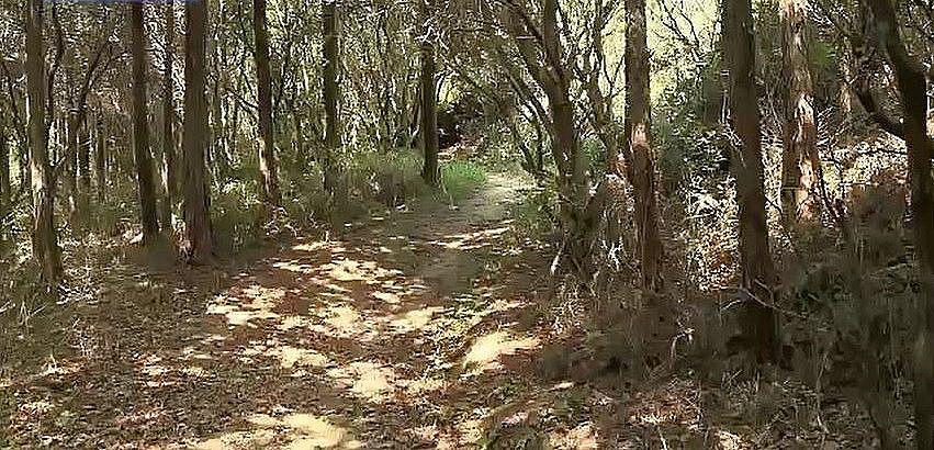 昭和63年に整備された、宮山のハイキング道