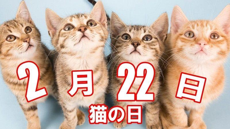 今日、2月22日は、猫の日ですね
