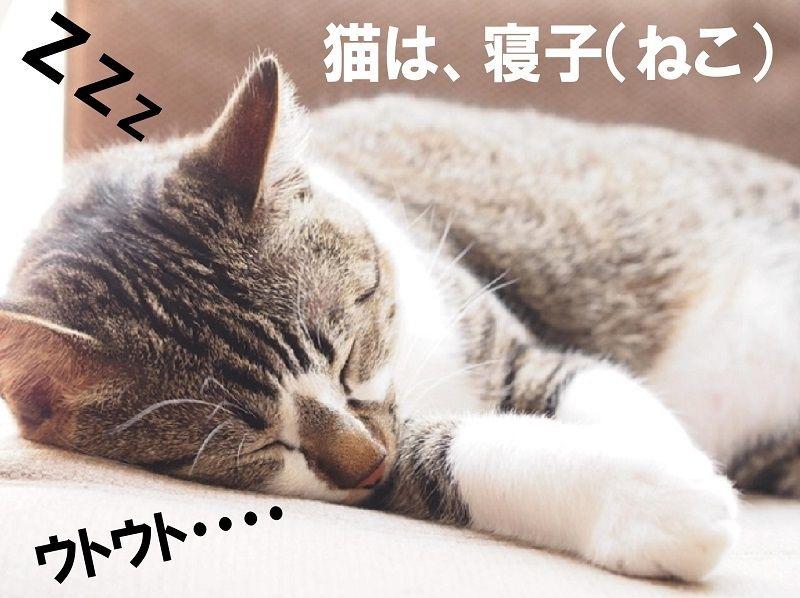 猫という呼び名は、『寝子(ねこ)』からきています