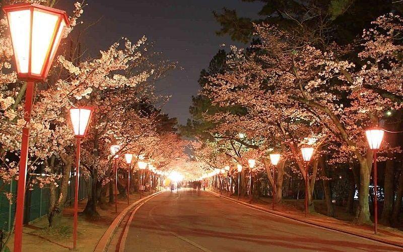 桜の名所、加古川日岡山公園の2021「ぼんぼり点灯」が始まっています!