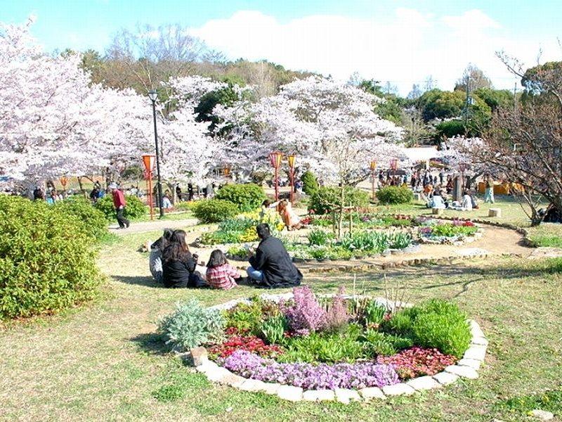加古川市の日岡山公園で開催される花とみどりのフェスティバルです