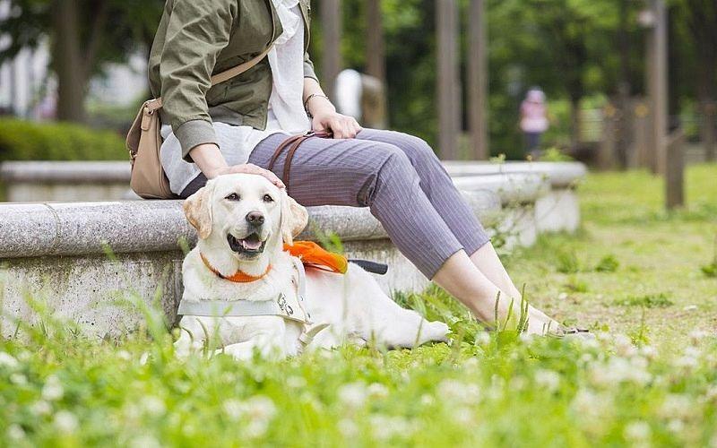 盲導犬は大切なパートナーです!