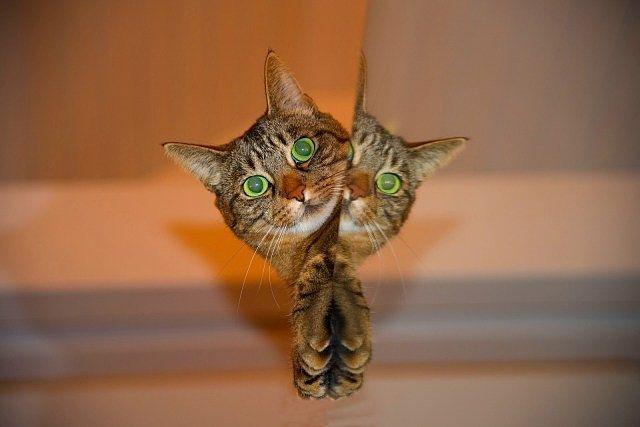 鏡に映る猫