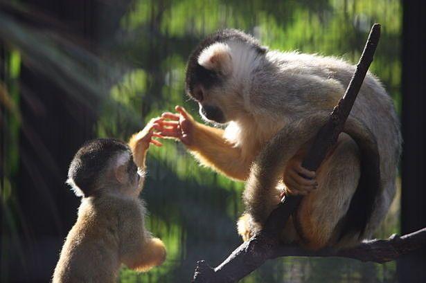 幸せを分かち合う木の上のお猿さん。