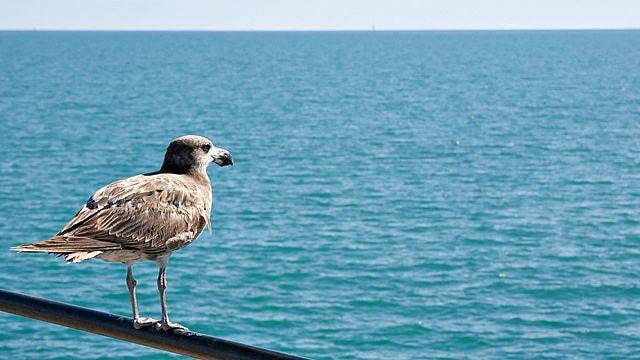 相手のことを思う海辺の鳥