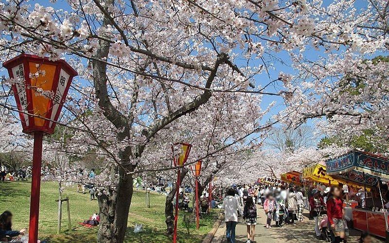 新型コロナウイルスの感染拡大防止のため「日岡山公園」内のお花見にも宴会の自粛要請がありました!