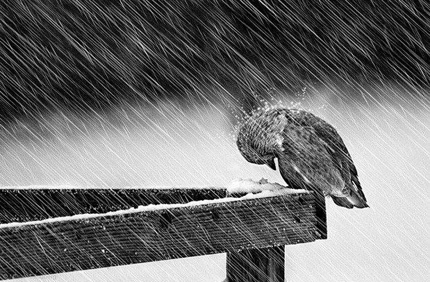 強い雨にくじけそうな小鳥