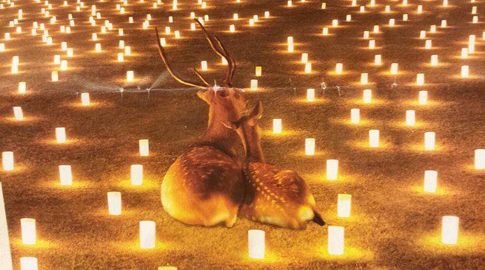 同じ思いで燈火を見る鹿たち。