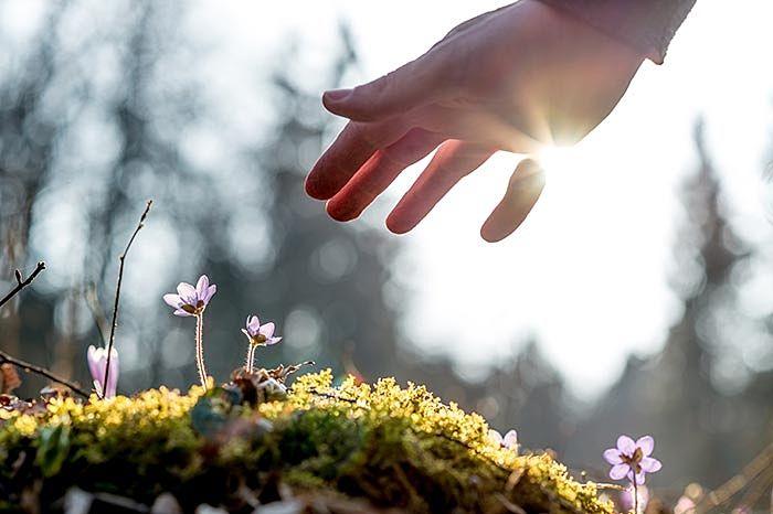道端の小さな花に手を差しのべる人。