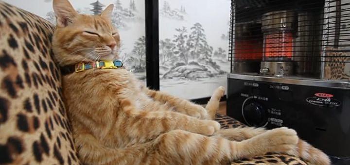 何の心配もなく、ストーブの前で温かさを感じている幸せな猫。