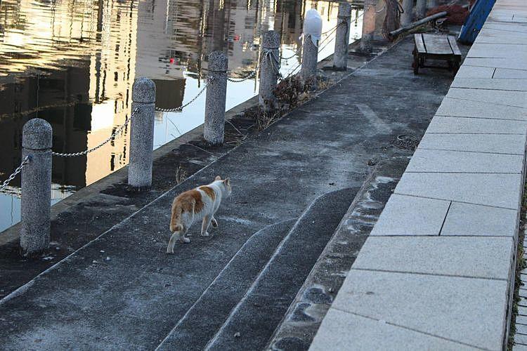 我が道を歩いて行く猫。