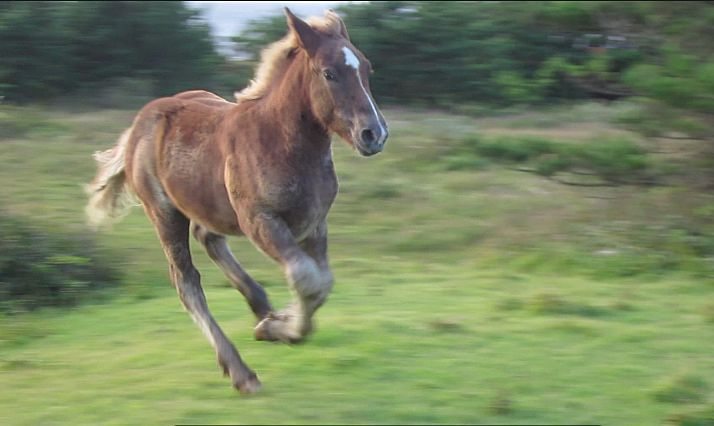 柵の中で安心して走り回る馬。