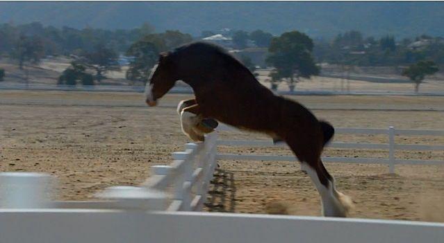 柵を飛び越えて外の世界に走り出す馬。