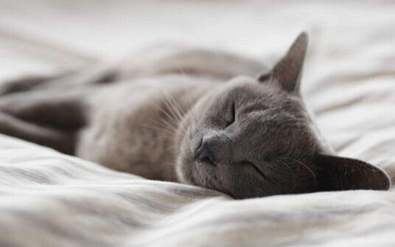 良く眠れる9つの睡眠習慣