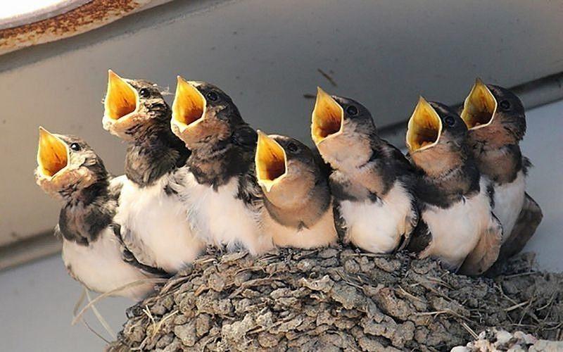 家 巣 作る が つばめ を 鳥が来る家って風水的にどう?ベランダに鳥が寄ってくるのは吉?凶?