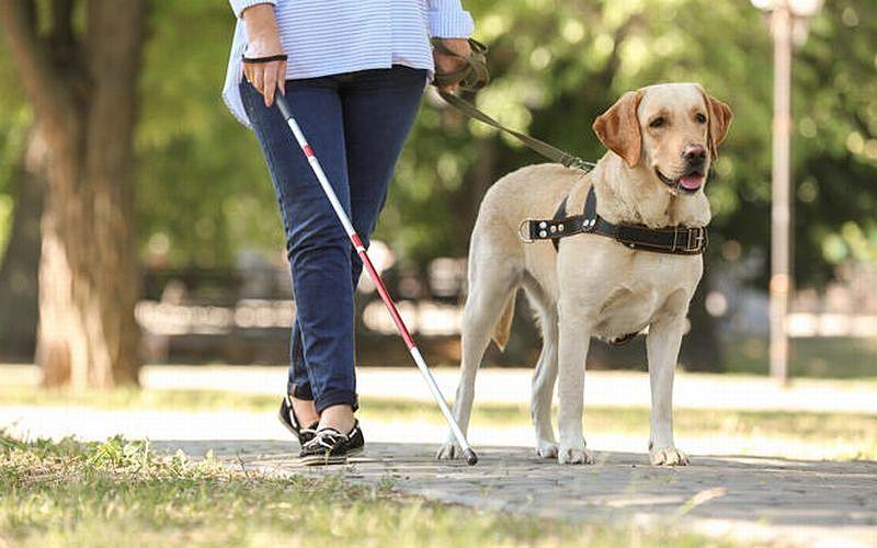 身体障害者補助犬とは