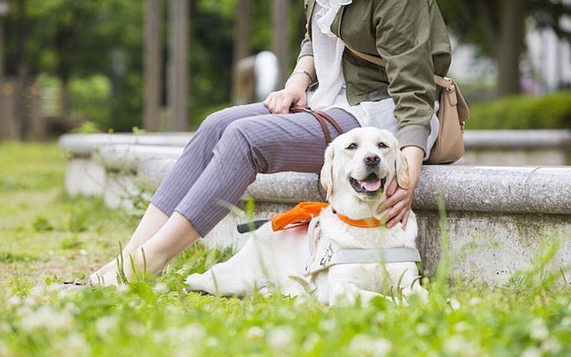 身体障害者補助犬相談窓口のご案内