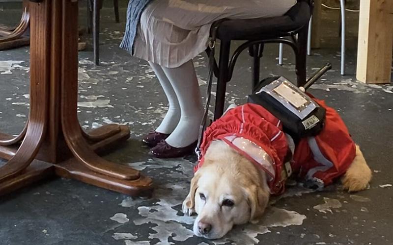 身体障害者補助犬の受け入れ