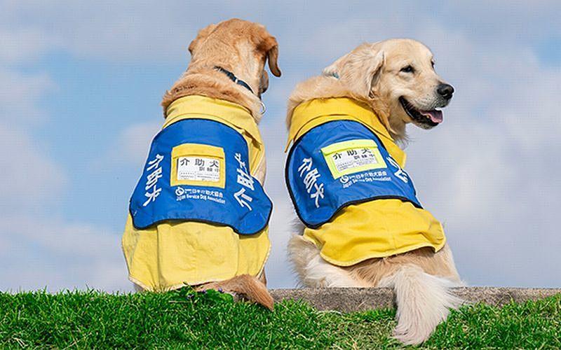 身体障害者補助犬は身体の不自由な人の身体の一部でペットではないのです