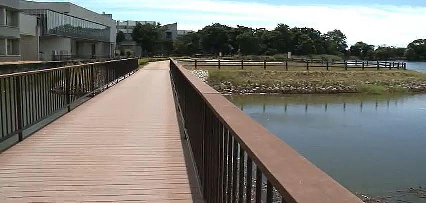 寺田池の東側の中島をつなぐ木製デッキ