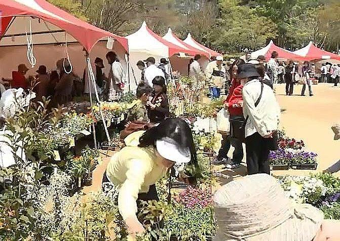 特に人気のある植木などの即売