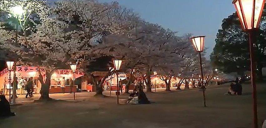 300本のぼんぼりが燈された夜桜