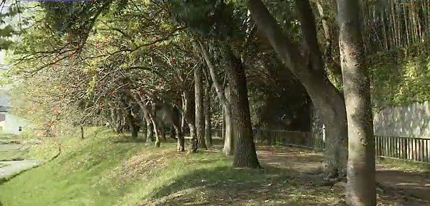 背丈のある木々が続き、 深い緑のトンネルを作る新井緑道