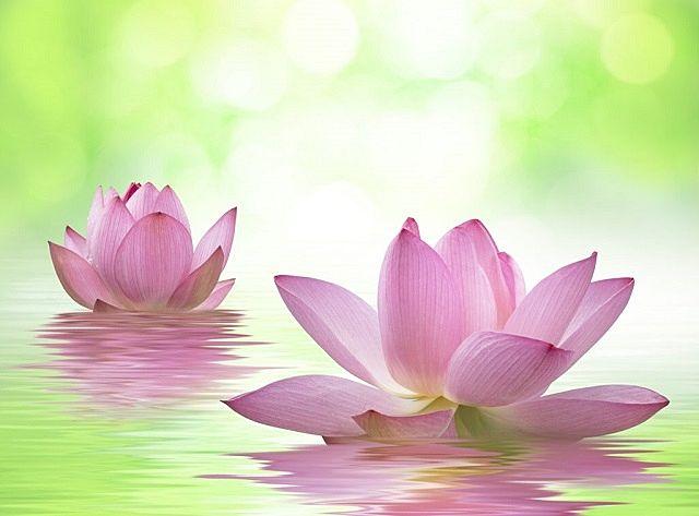 私たちの理想の姿、常楽我浄をあらわす蓮の花